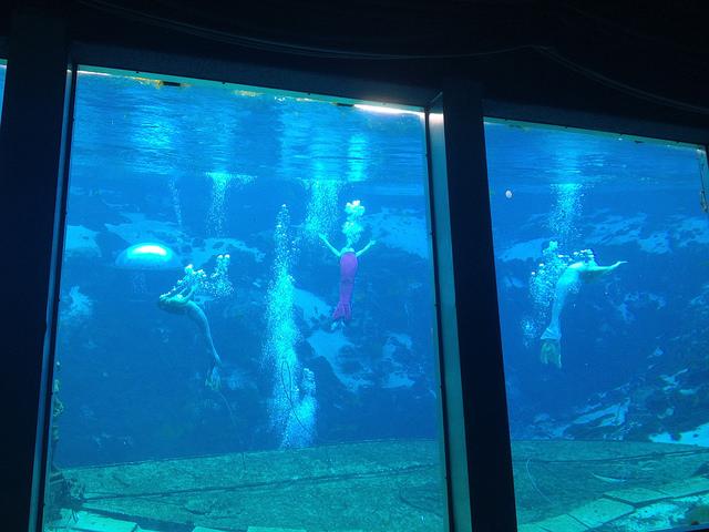 weeki wache mermaids