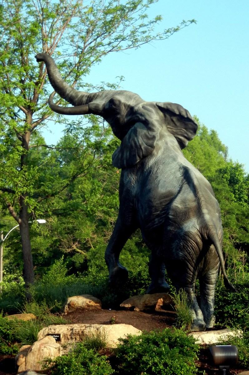 Reaching Elephant, Forest Park St. Louis